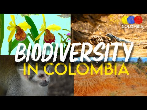 Everything about Biodiversity in Colombia - Colombian Travel Guide
