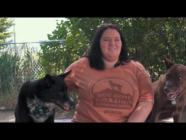 Lauren - Kennel Director for Dog Gone Amazing
