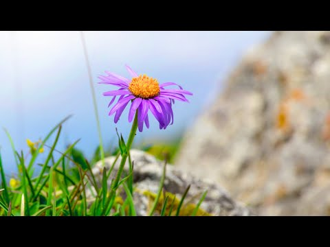 10 Hours Of Relaxing Music - Sleep Music, Piano Music For Stress Relief, Sleeping Music (Honley)
