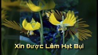 Xin Được Làm Hạt Bụi - Tg: Chân Quang - Cs: Dzoãn Minh