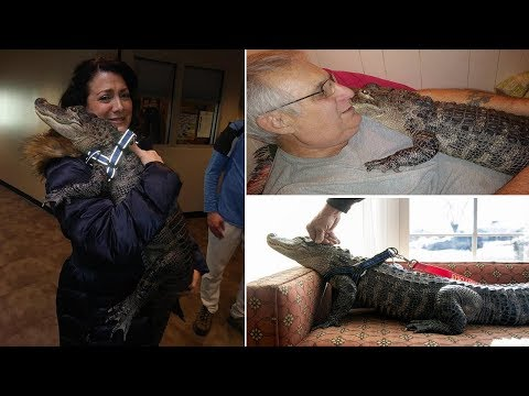 The Wake Up Show - Meet An Emotional Support Alligator Named Wally... He's Just Here To Help.