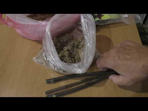 Инжир хранение черенков в мох сфагнуме