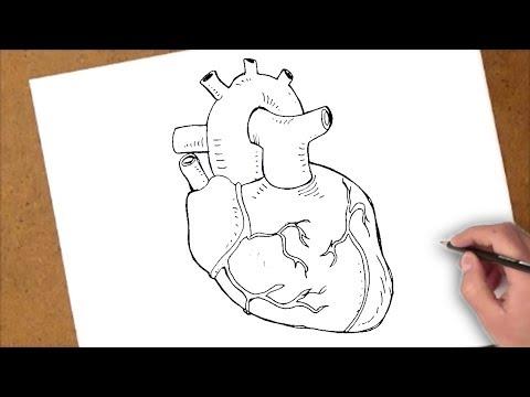 كيفية رسم قلب حقيقي Youtube