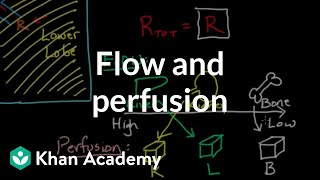 Flow and Perfusion