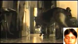 Chele amar mosto manush(Pradyut barik)