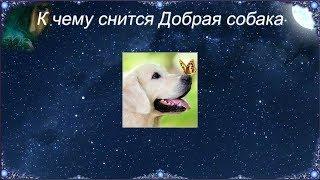 К чему снится Добрая собака (Сонник)