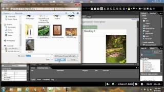 Cheapest Expression Studio 4 Web Professional