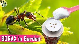 BORAX in Gardening: As a Fertilizer and Ant Control - Borax Ant Bait Recipe