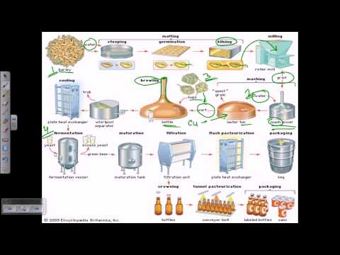 Beer Production Overview