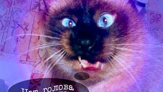 Смешное видео про котов, впервые увидевших потолочный вентилятор