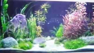 TUTO création complete d'un bac ou Aquarium de 400 Litres sur un an