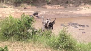 Hippo pool at Ngorongoro Crater Park