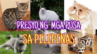 PRESYO NG MGA PUSA SA PILIPINAS   UPDATED 2020   CAT PRICE LIST IN THE PHILIPPINES