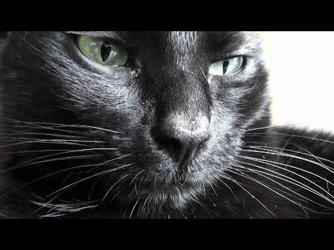 The Kits Cats - Vlog #2