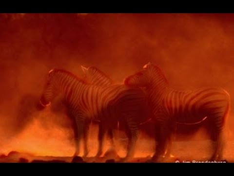 Resilient Zebras