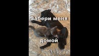 Антистресс собаки усыновили котёнка Димыч