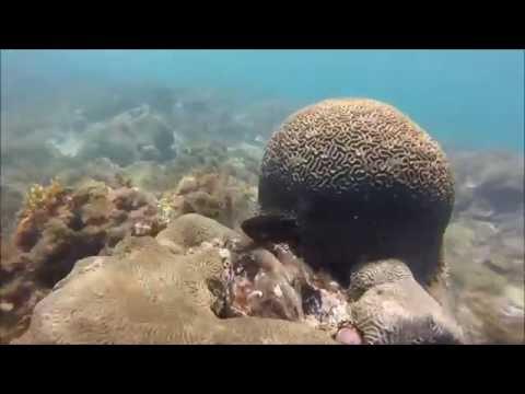 Snorkel Smuggler's Cove Saint Lucia