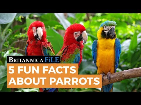 5 Fun Facts about Parrots