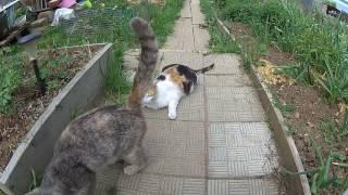 как приманить кошку кошек рыбка не нужна