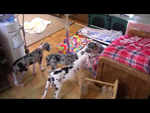 Download Youtube: Musician Jewel teaches spinning puppy Buckeyes am 1112018