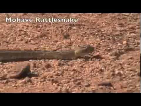 Rattlesnake repellent
