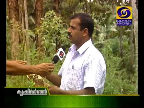 Sanmarga Dayini, Part 2 | തേനീച്ച കൃഷി