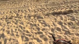Staffordshire Bull Terrier Kain & Ciara Jumper....