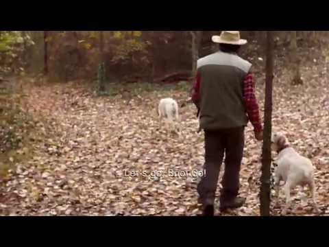 Dream Of Italy: Truffle Hunting In Piedmont