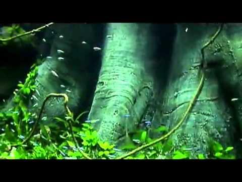 Fish Tank 3d Wallpaper Amazona Aquaterra 3d Aquarium Background Youtube