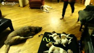 Repeat youtube video Puppy Cam 4/2/14 AM