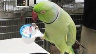 Funny Parrots In Birds Market