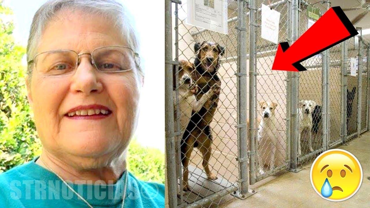Download Mujer entra a la perrera y pregunta por el perro más viejo que nadie quiere ¡Mira quien sale!