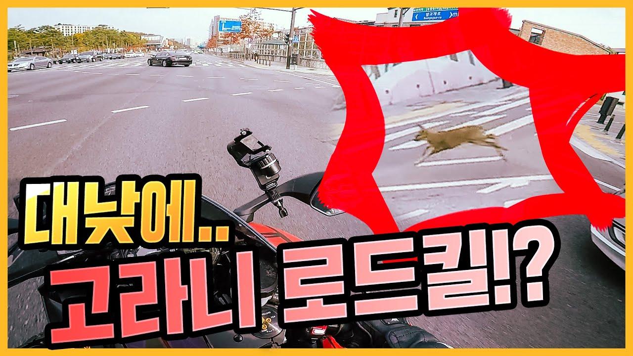서울 대낮에 고라니 로드킬? (feat. 독거노총각 패러디) ∥ 고마 니 좀 도마치재! 1부