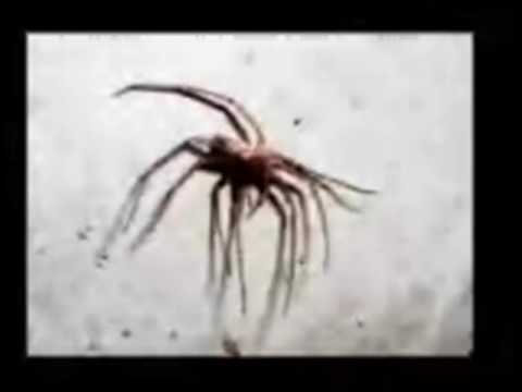 Spiders, Natural History Museum lecture