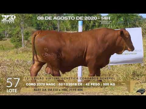 LOTE 57 CORO 2370
