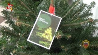 Два москвича угнали машину, чтобы украсть новогодние елки