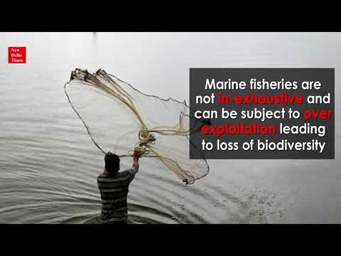 Effect Of Small-Scale Fisheries On Marine Ecosystems
