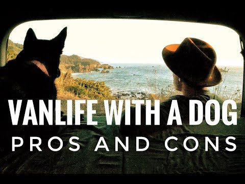 vanlife-with-a-dog:-pros-and-cons