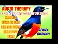 Master Burung Paling Dicari Kombinasi Suara Air Hujan Plus Cililin Gacor Variasi Kicau Mania(.mp3 .mp4) Mp3 - Mp4 Download