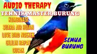 Download Master Burung Paling Dicari Kombinasi Suara Air Hujan Plus Cililin Gacor Variasi Mp3