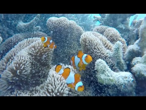 Tourism of Enggano Island (Wisata Bahari Pulau Enggano Bengkulu Indonesia)