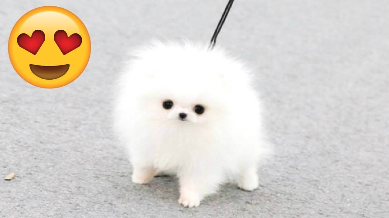 CUTE PUPPIES - Cute Puppy Videos Compilation And Funny Puppies [CUTENESS OVERLOAD]