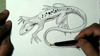 How to draw a lizard or gecko