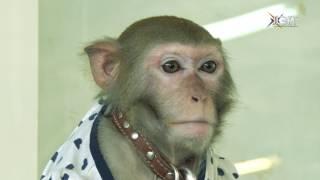 Как покормить обезьянку и сделать фото на память. В Воскресенске работает чудо-зоопарк