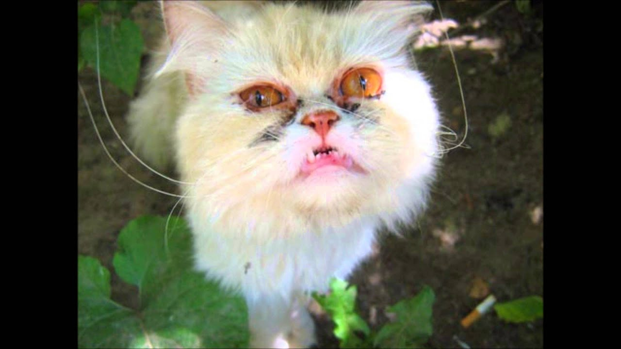 20 Ugliest Cats In The World - YouTube