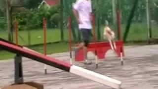 Dog Agility Training Malaysia - Yeoh & Tori