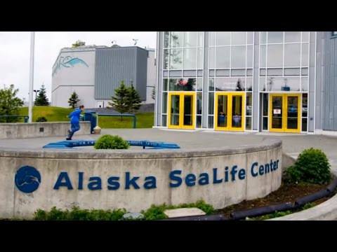 Visiting Alaska SeaLife Center, Aquarium in Seward, Alaska, United States - The Best Aquarium 2017