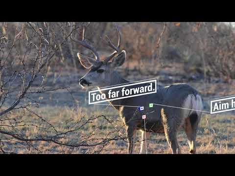 Deer Shot Placement