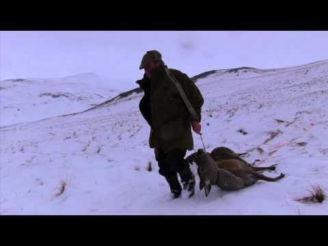 Red Deer Hind Stalking In Snowy Highland Perthshire