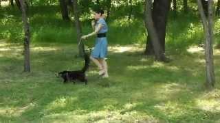 Лирикум, гуляем с мейн-кунами в парке, Норд - черный мраморный 6,5 месяцев.